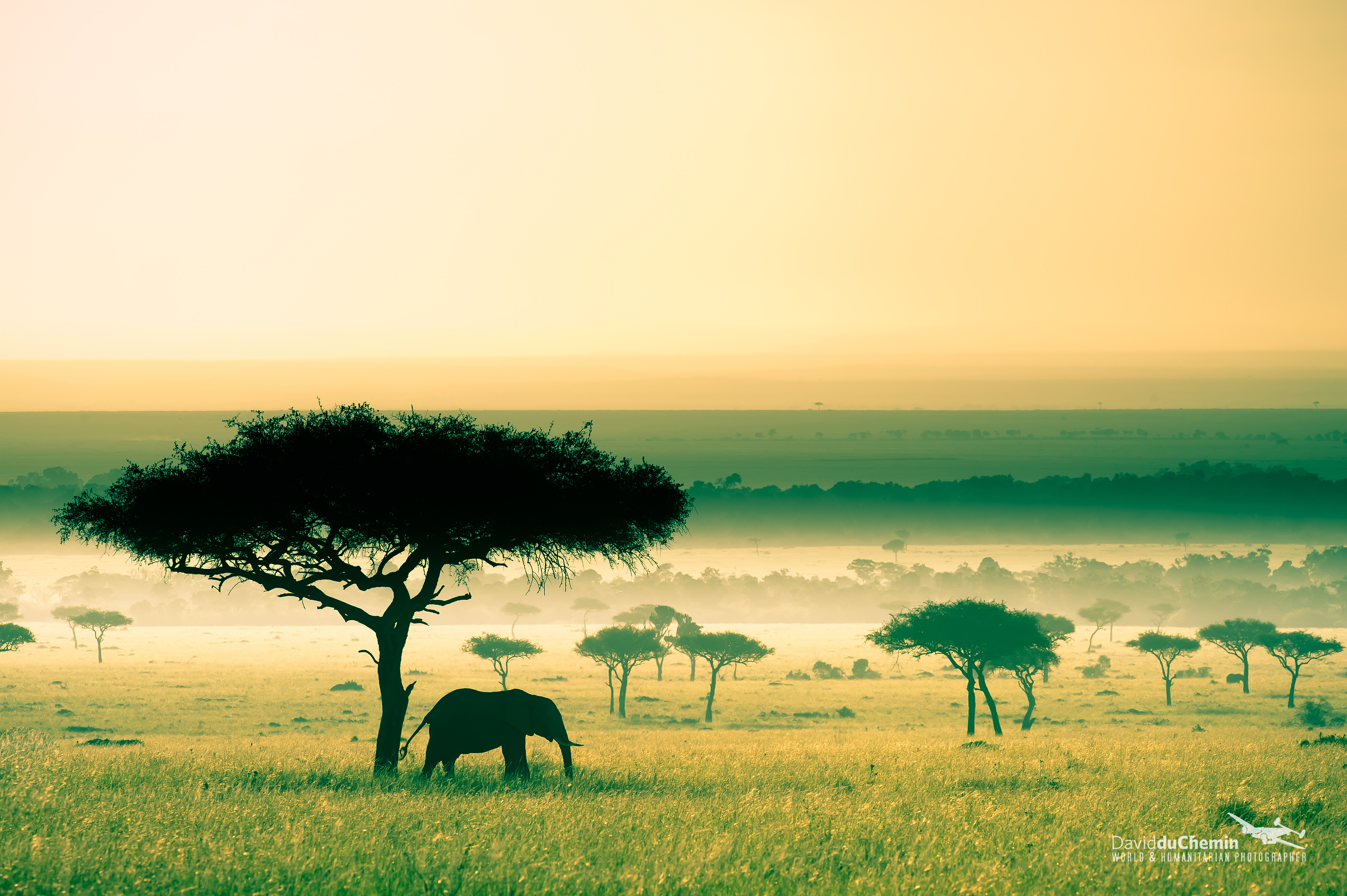 wallpaper masai mara - photo #16