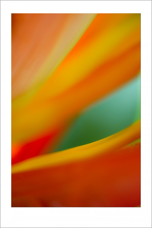 20131007-floral-abstracts-93