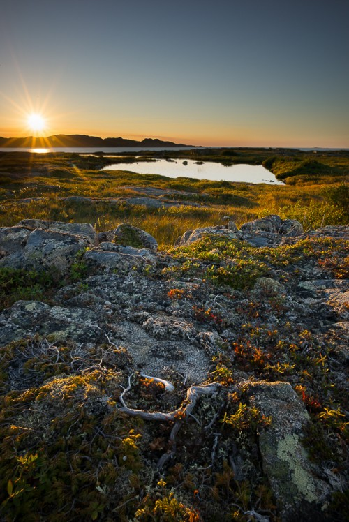 Fogo Island Bog at Sunset