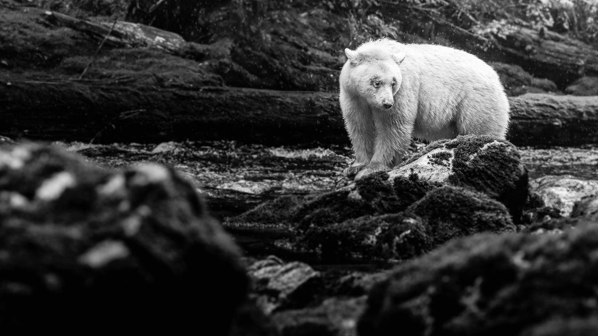 20150920-duChemin-GreatBearRainforest-1633