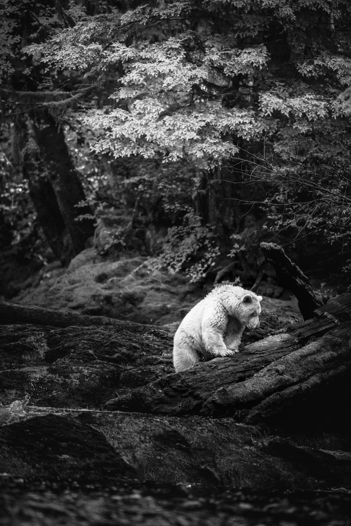 20150920-duChemin-GreatBearRainforest-3779