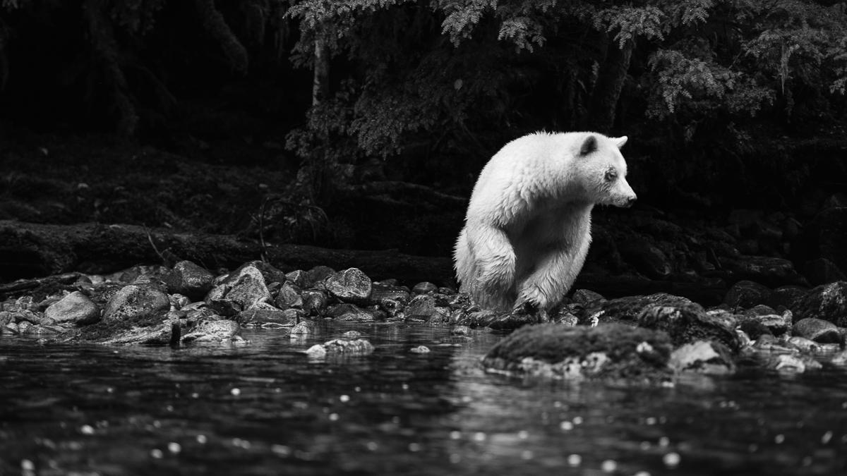 20150921-duChemin-GreatBearRainforest-1363