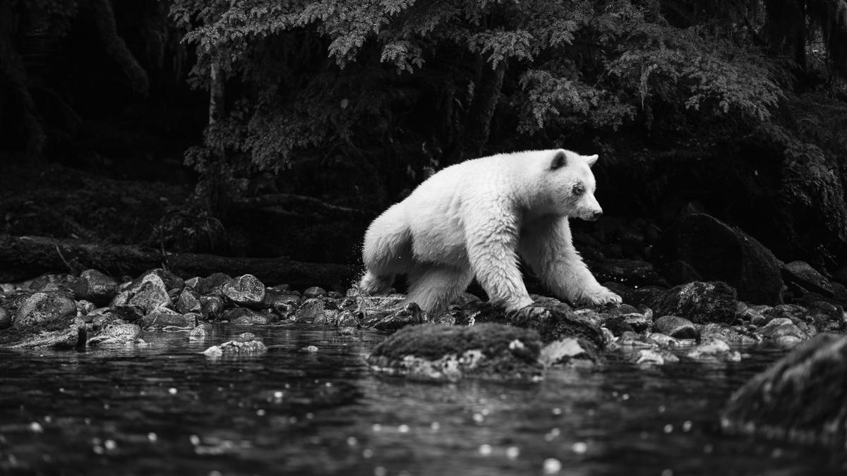20150921-duChemin-GreatBearRainforest-1364