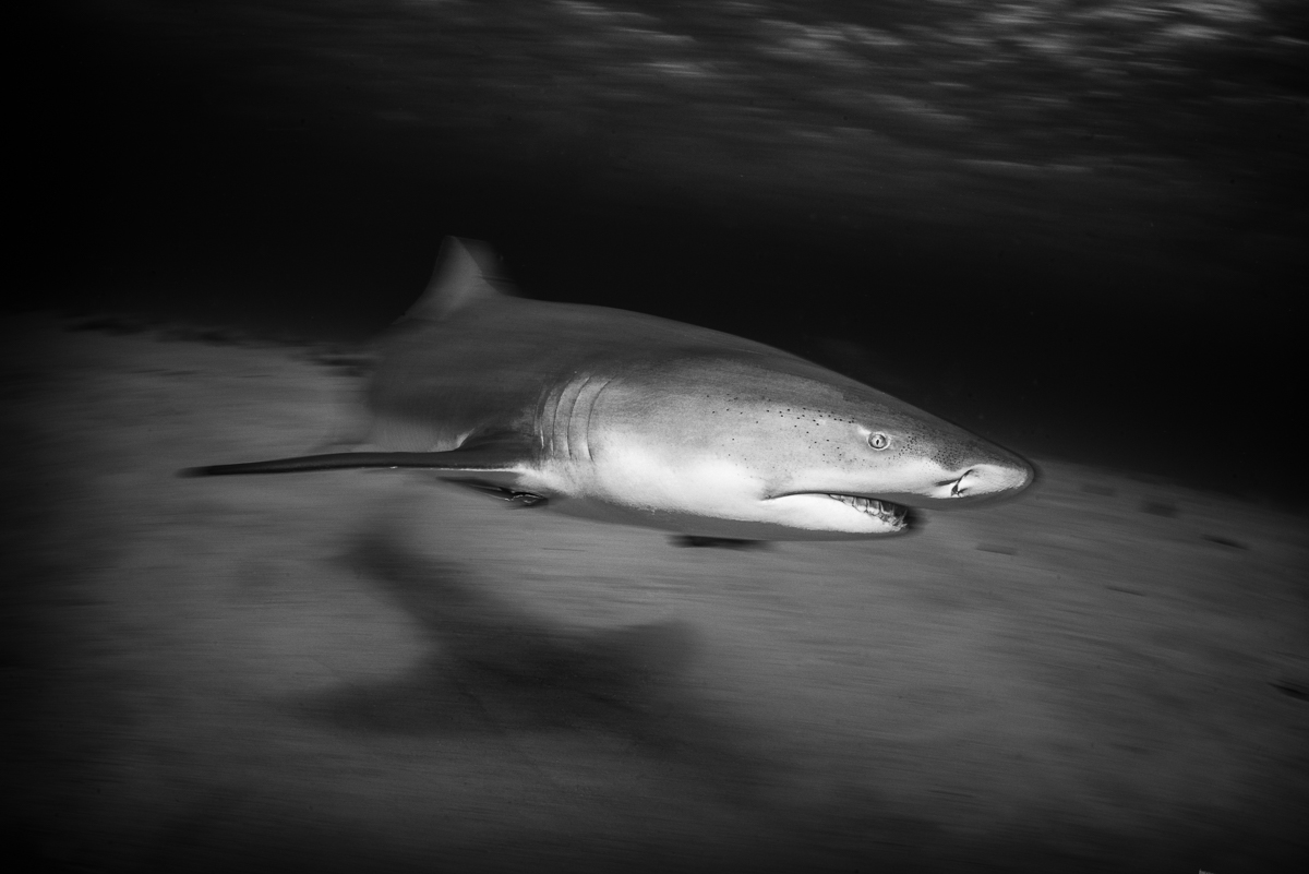 20170418-duChemin-Bahamas-Sharks-1072-Edit