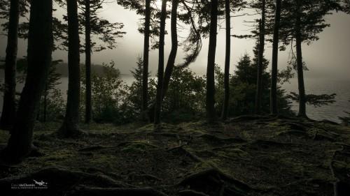 DuChemin-Wallpaper-Nefoundland