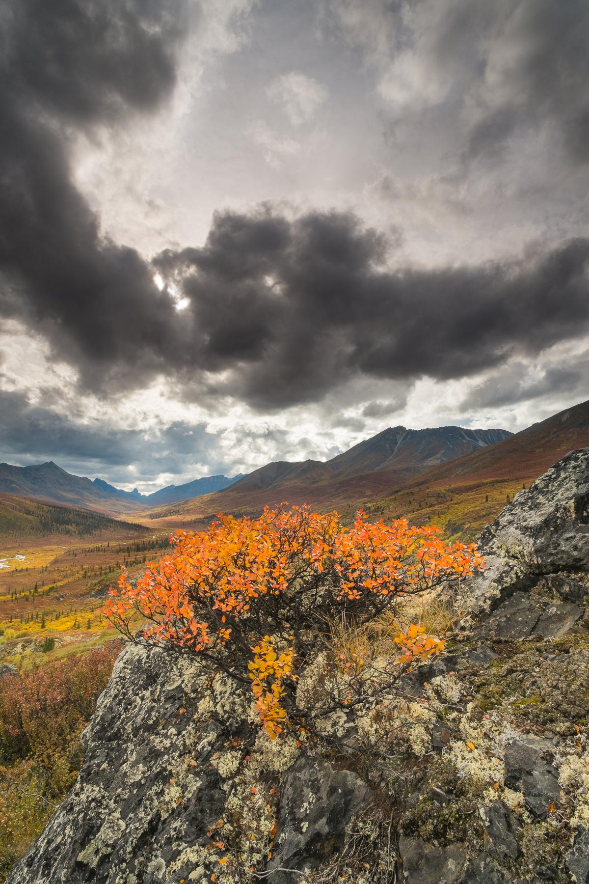 Tombstone Territorial Park, Yukon Territory, Canada.