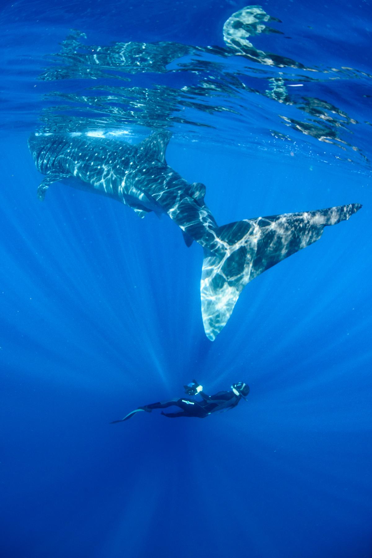 20150808-duChemin-WhaleSharks-183