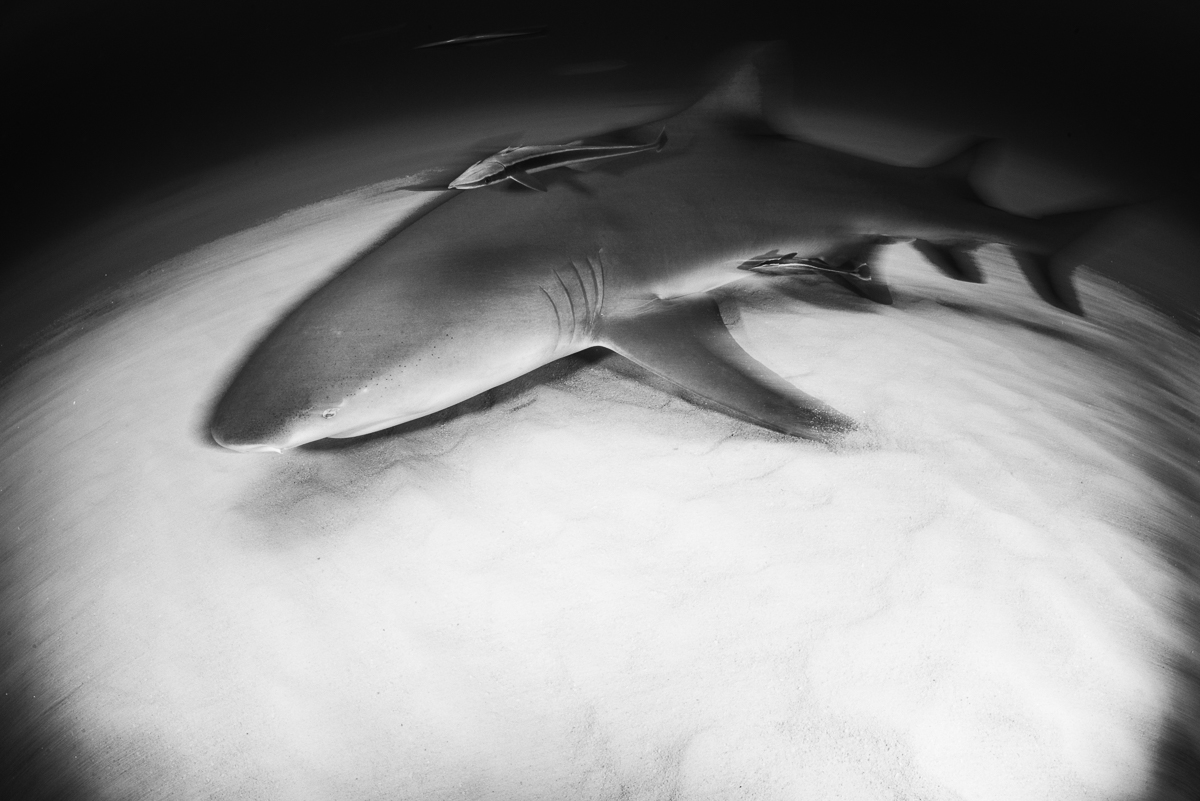 20170418-duChemin-Bahamas-Sharks-17-Edit