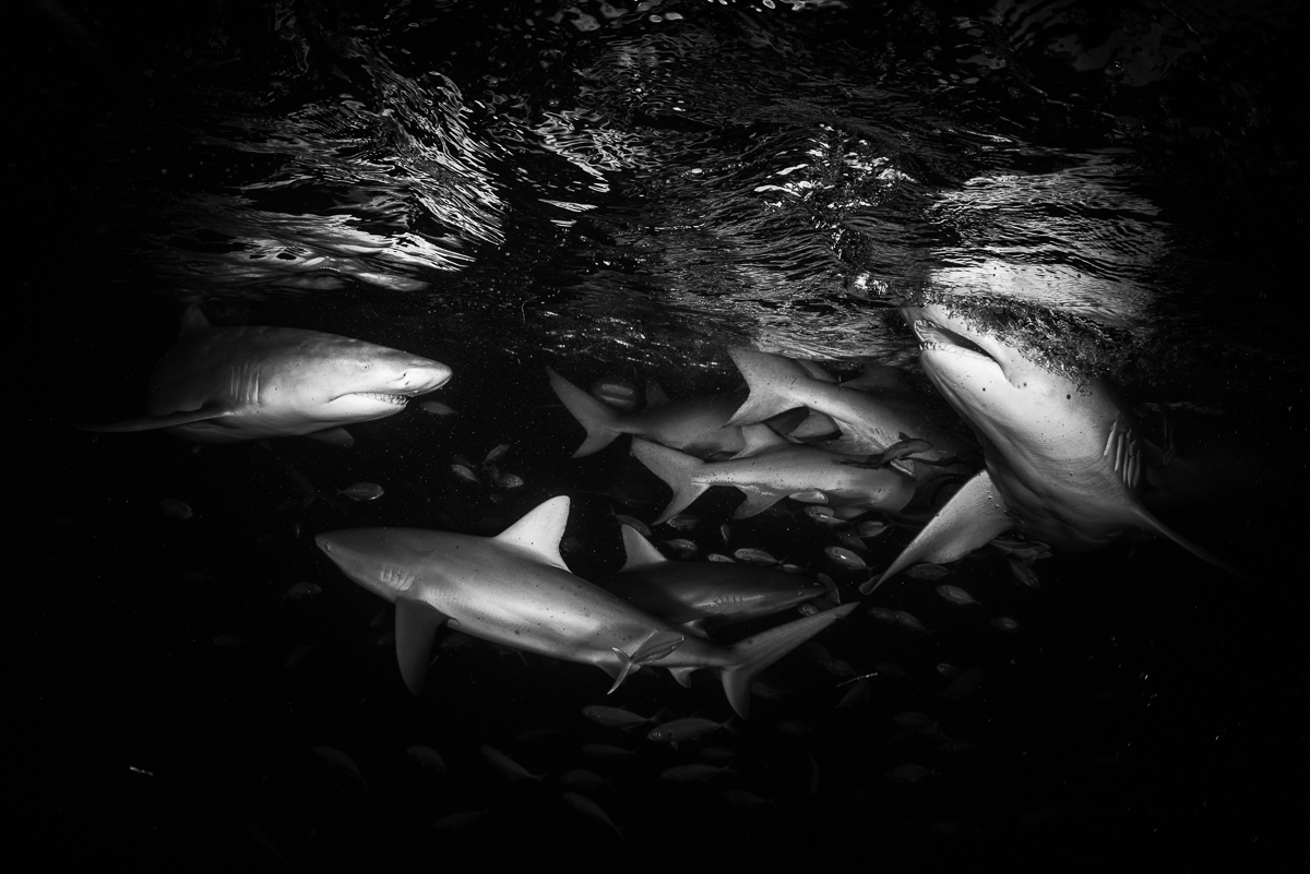 20170418-duChemin-Bahamas-Sharks-21-Edit