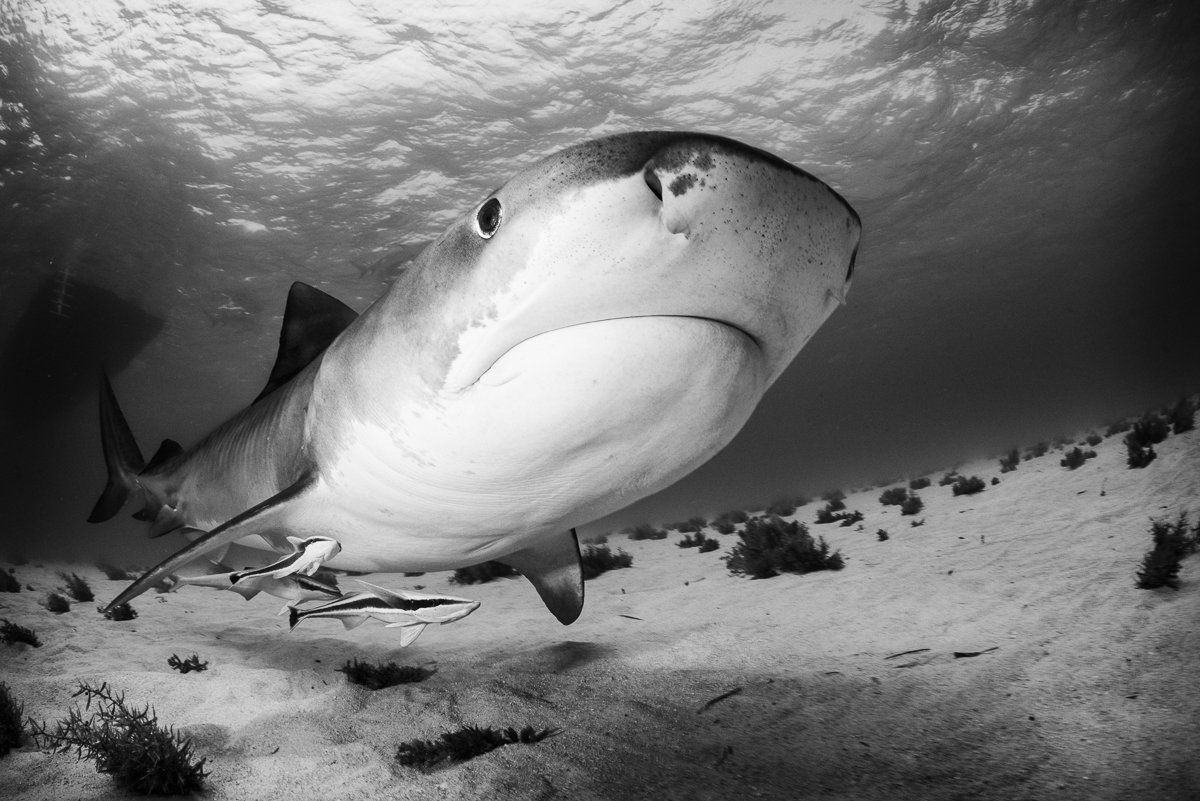 20170418-duChemin-Bahamas-Sharks-363-Edit
